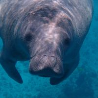 Manatee Awareness Month
