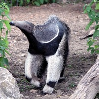 World Anteater Day