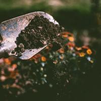 International Soil Day