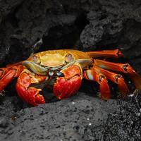 Crab Appreciation Day