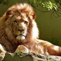 United Nations World Wildlife  Day