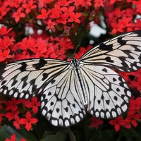 Learn About Butterflies Day