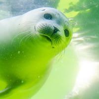 International Seal Day