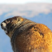 National Beaver  Day