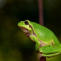 Annual Save the Frogs Day