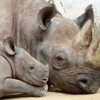 Save a Rhino Day
