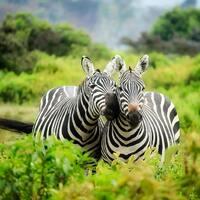 National Wildlife Day