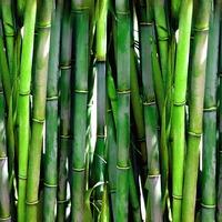World Bamboo Day
