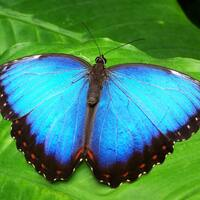 National Butterfly and Hummingbird Day
